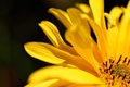 Picture yellow, petals, image, color, flower