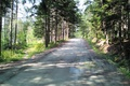 Picture summer, road, green, forest, trail