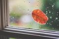 Picture leaf, sheet, glass, window, orange, drops