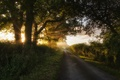 Picture rays, light, nature, road, trees, the bushes, summer, the sun, grass