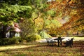 Picture benches, foliage, Park, table, trees, autumn
