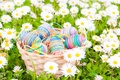 Picture flowers, eggs, spring, flowers, Easter, eggs, Easter, chamomile, field