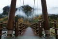 Picture trees, bridge, fog, Japan, Japan