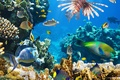 Picture underwater, coral, coral reef, fish, fishes, underwater world, tropical, the ocean, ocean, reef
