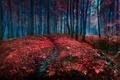 Picture forest, landscape, nature, path