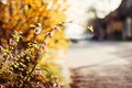 Picture flowers, flowers, widescreen, road, blur, HD wallpapers, Wallpaper, flowers. flower, leaves, tree, greens, full screen, ...