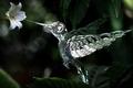 Picture flower, mechanism, robot, Hummingbird