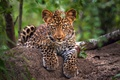 Picture trees, foliage, small, leopard
