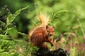 Picture flowers, nature, grass, rodent, protein, forest