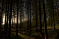 Picture the evening, trees, forest