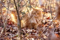 Picture light, solar, red, leaves, fluffy, dry, branches, cat
