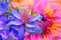 Picture touch, paint, petals, garden, flowerbed, line, flower