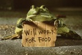Picture work for food, frog, text