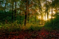 Picture autumn, forest, leaves, the sun, trees, morning