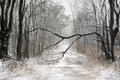 Picture winter, forest, art, winter