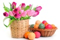 Picture eggs, Easter, tulips, easter, white background
