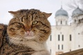 Picture cat, mustache, face, temple, dome, Striped