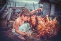 Picture sheds, care, grain, chicken, children, Wallpaper from lolita777, food, yard, birds, mood, boy