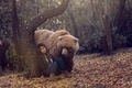 Picture bear, girl, forest