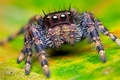 Picture eyes, macro, spider, paws, spider, insect, eyes, macro, insect, paws