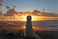 Picture Dog, Sunset, Sea, Beach, Dog