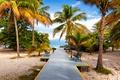 Picture paradise, shore, palms, beach, sea, sand, sea, sand, shore, beach, summer, tropical