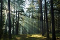 Picture trees, light, forest, nature