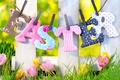 Picture flowers, spring, fence, tulips, the fence, grass, grass, easter, nature, spring
