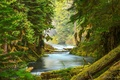 Picture trees, forest, river, moss, nature