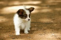 Picture dog, walk, summer