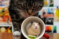 Picture cat, mouse, Cup