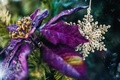 Picture bokeh, decoration, tree, New Year, flower