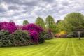 Picture lawn, Azalea, HDR, summer, Kenwood, summer, trees
