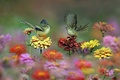 Picture flowers, birds, tail, wings, meadow