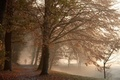 Picture fog, Park, autumn