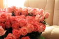 Picture flowers, holiday, romance, day, love, roses, birth, pink