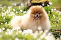 Picture dog, summer, flowers