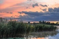 Picture summer, morning, lake, reed