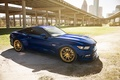 Picture mustang, ford, blue, 5.0, gts