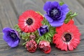 Picture purple, pink, anemones