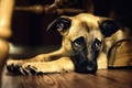 Picture mood, dog, looks, mongrel, sadness, pechalka