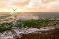 Picture sea, Seagull, clouds