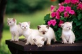Picture flowers, kids, kittens