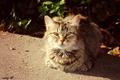 Picture Sunny cat, cat, autumn, cats