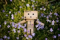 Picture grass, nature, box, danbo, flowers