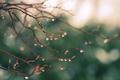 Picture greens, drops, macro, nature, glare, rain, branch