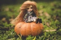 Picture long hair, toy, pumpkin, doll, nature, red, sitting
