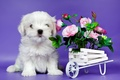Picture flowers, cute, puppy