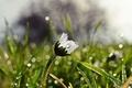 Picture grass, field, flower, drops