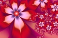 Picture red, white, petals, flowers